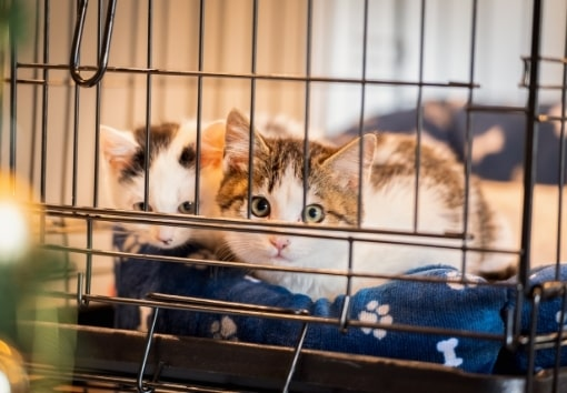 名古屋のFLAG株式会社が保護猫支援をする理由