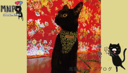 ネーロきゅんの黒猫ビルパトロール