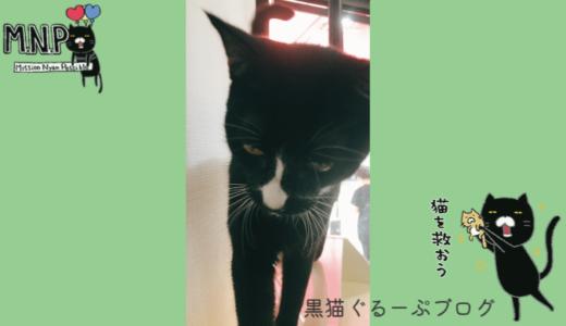 ぽっちゃり黒猫ポッキーダイエットに挑戦!