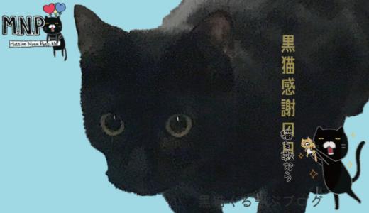 8月17日は黒猫感謝の日