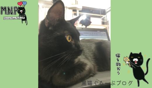 黒猫ビルの人気者黒猫ネーロきゅんについて♡