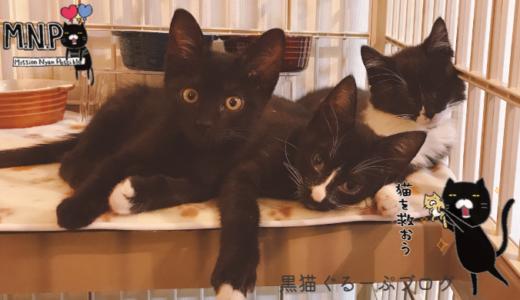 社猫のおうちをFLAG本部で猫猫DIY